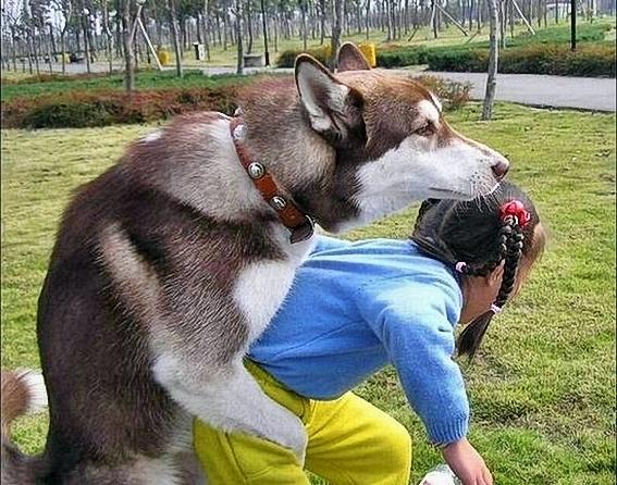 Funny_Animal_Sex_14.jpg
