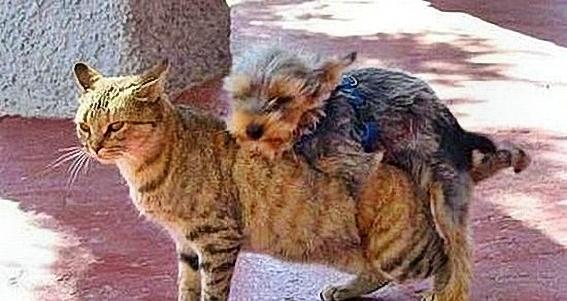 Funny_Animal_Sex_18.jpg