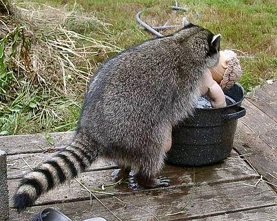 Funny_Animal_Sex_22.jpg
