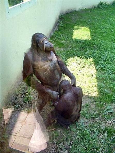 Funny_Animal_Sex_26.jpg