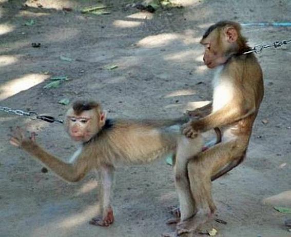 Funny_Animal_Sex_27.jpg