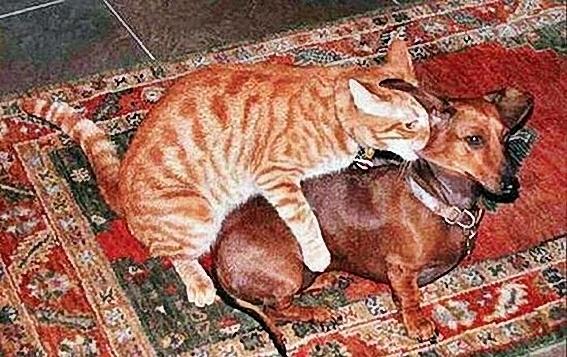 Funny_Animal_Sex_32.jpg