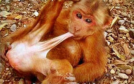 Funny_Animal_Sex_35.jpg