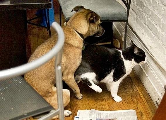Funny_Animal_Sex_37.jpg