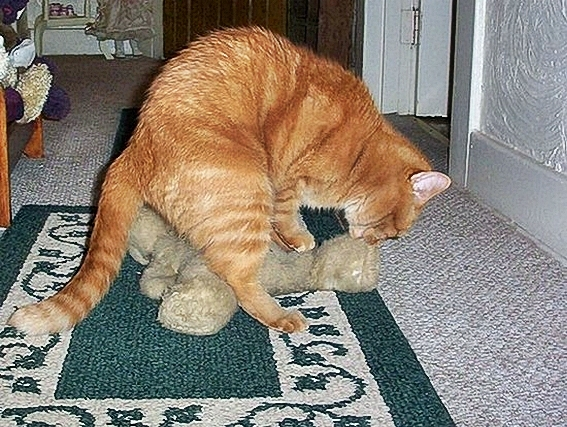 Funny_Animal_Sex_4.jpg