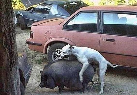 Funny_Animal_Sex_7.jpg