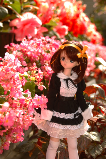 綺麗なお花に囲まれ