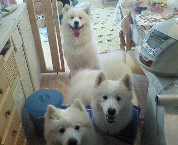炊飯器前の3人.jpg