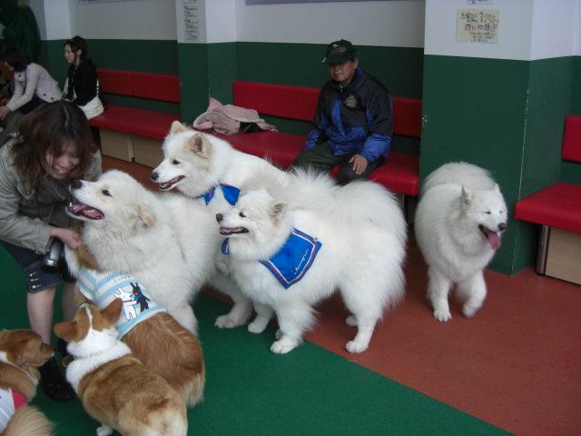 犬犬犬犬大集合samo.jpg