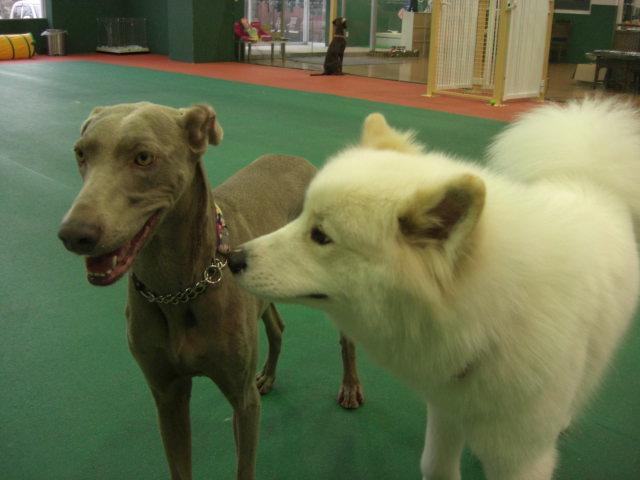 2仲良し犬.jpg