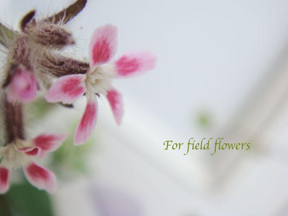 野の花090512-2