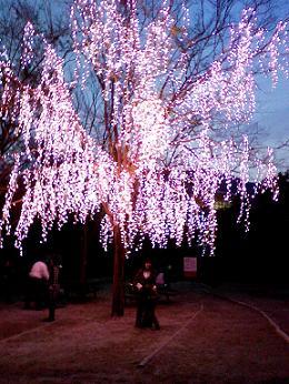 lights09apr09.jpg