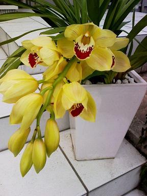 orchid13apr09.jpg
