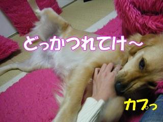 DSCF0140a.jpg
