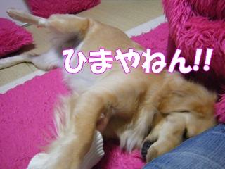 DSCF0141a.jpg