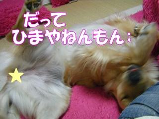 DSCF0146a.jpg