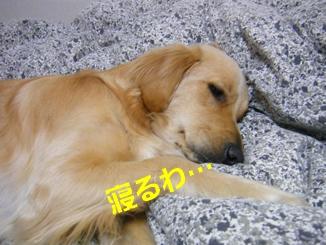 DSCF0963.jpg