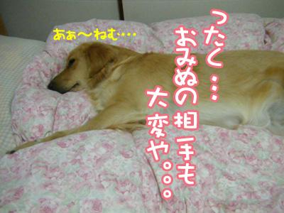 DSCF6367.jpg