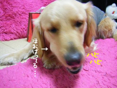DSCF6613.jpg