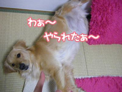 DSCF6649.jpg