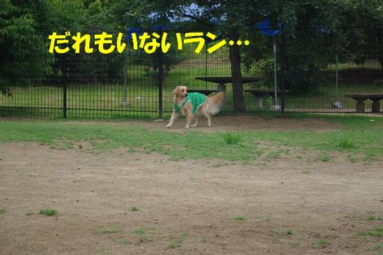 IMGP9205.jpg