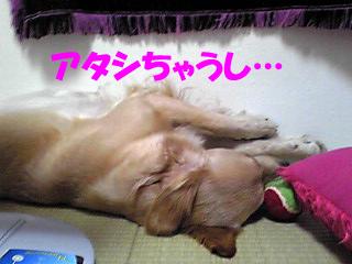 PA0_0045a.jpg