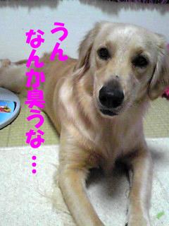 PA0_0063a.jpg