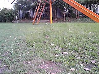 PA0_0098a.jpg