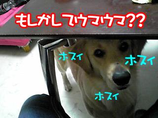 PA0_0148a.jpg