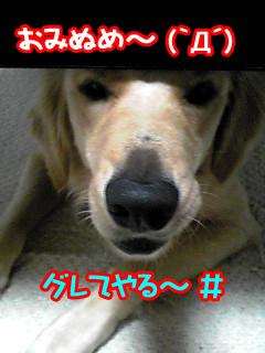 PA0_0220a.jpg