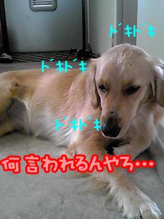 PA0_0242a.jpg