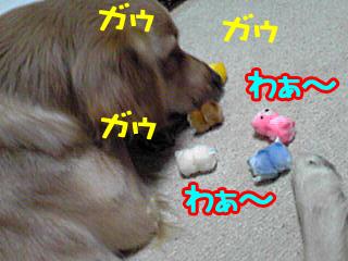 PA0_0305.jpg