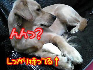 PA0_0323a.jpg