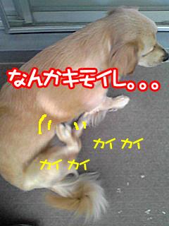 PA0_0340a.jpg