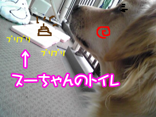 PA0_0345bb.jpg