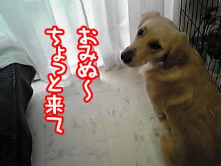 PA0_0351a.jpg