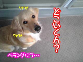 PA0_0352.jpg