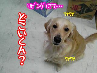 PA0_0369.jpg