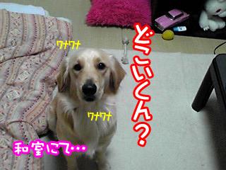PA0_0373.jpg