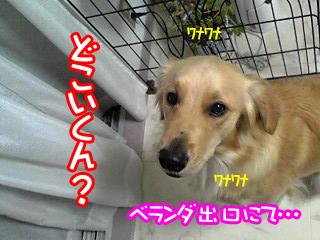 PA0_0374.jpg