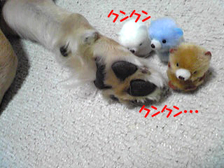 PA0_04001127.jpg