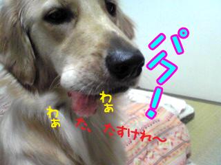 PA0_0404.jpg