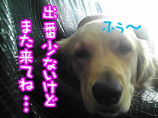 PA0_0415.jpg