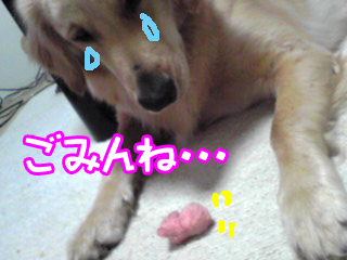 PA0_0424a.jpg