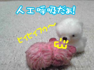 PA0_0431a.jpg