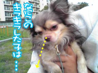 PA0_0454a.jpg