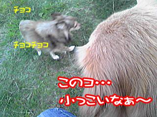 PA0_0458a.jpg