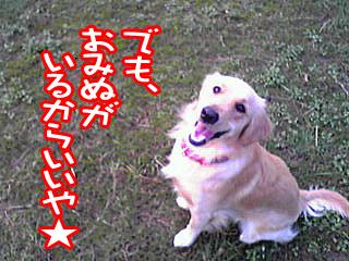 PA0_0465a.jpg