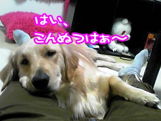 PA0_0469a.jpg