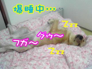 PA0_0483a.jpg